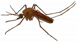 Download this high resolution Mosquito Icon