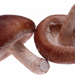 Download this high resolution Mushroom PNG Picture
