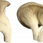 Now you can download Mushroom Icon Clipart