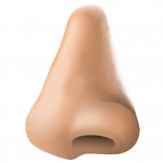 Download and use Nose In PNG