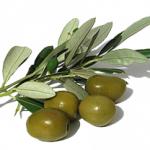 Grab and download Olives PNG