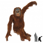 Download and use Orangutan PNG in High Resolution