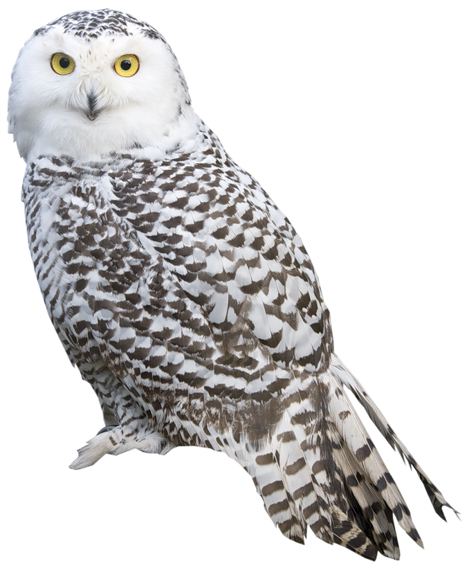 Download for free Owls PNG Icon