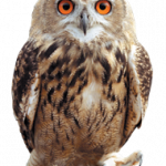 Now you can download Owls Icon