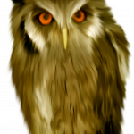 Download this high resolution Owls PNG in High Resolution
