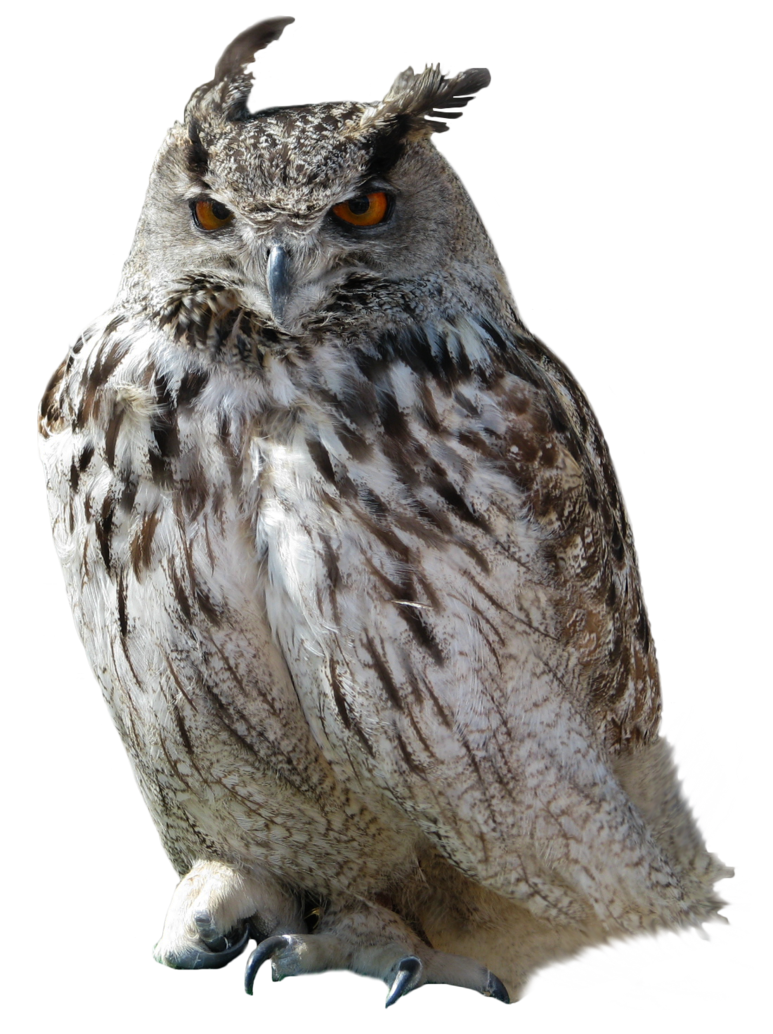 Grab and download Owls PNG in High Resolution