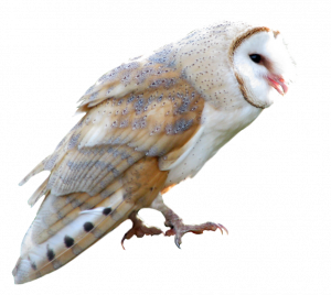 Free download of Owls Icon