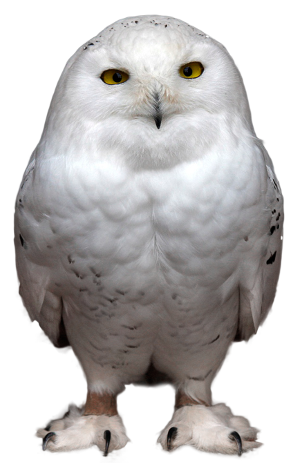 Download for free Owls Transparent PNG File