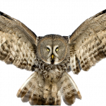 Download and use Owls Icon PNG