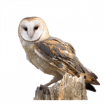 Now you can download Owls Icon PNG