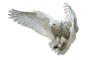 Download this high resolution Owls High Quality PNG