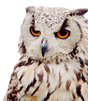Download and use Owls Transparent PNG Image