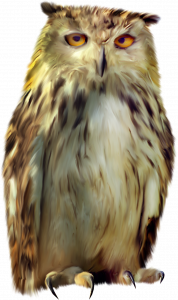 Now you can download Owls PNG Picture