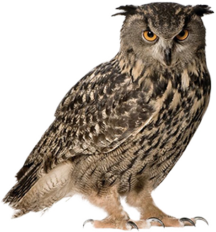 Grab and download Owls PNG Picture