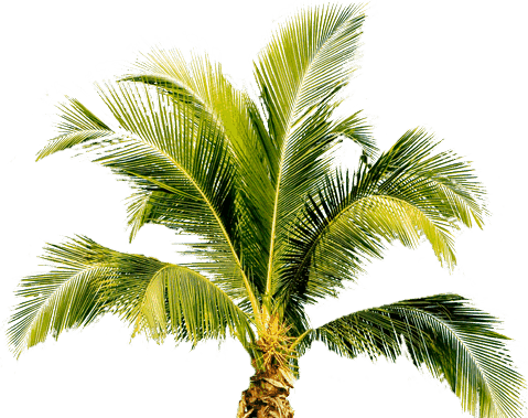 Now you can download Palm Tree Icon