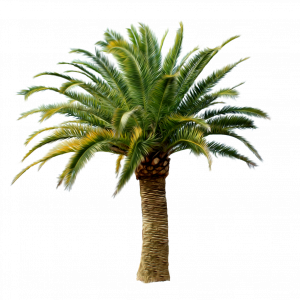 Download for free Palm Tree High Quality PNG