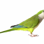 Now you can download Parrot High Quality PNG
