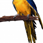 Grab and download Parrot PNG Image