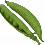 Grab and download Pea PNG Image Without Background