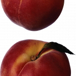 Download for free Peach Icon Clipart
