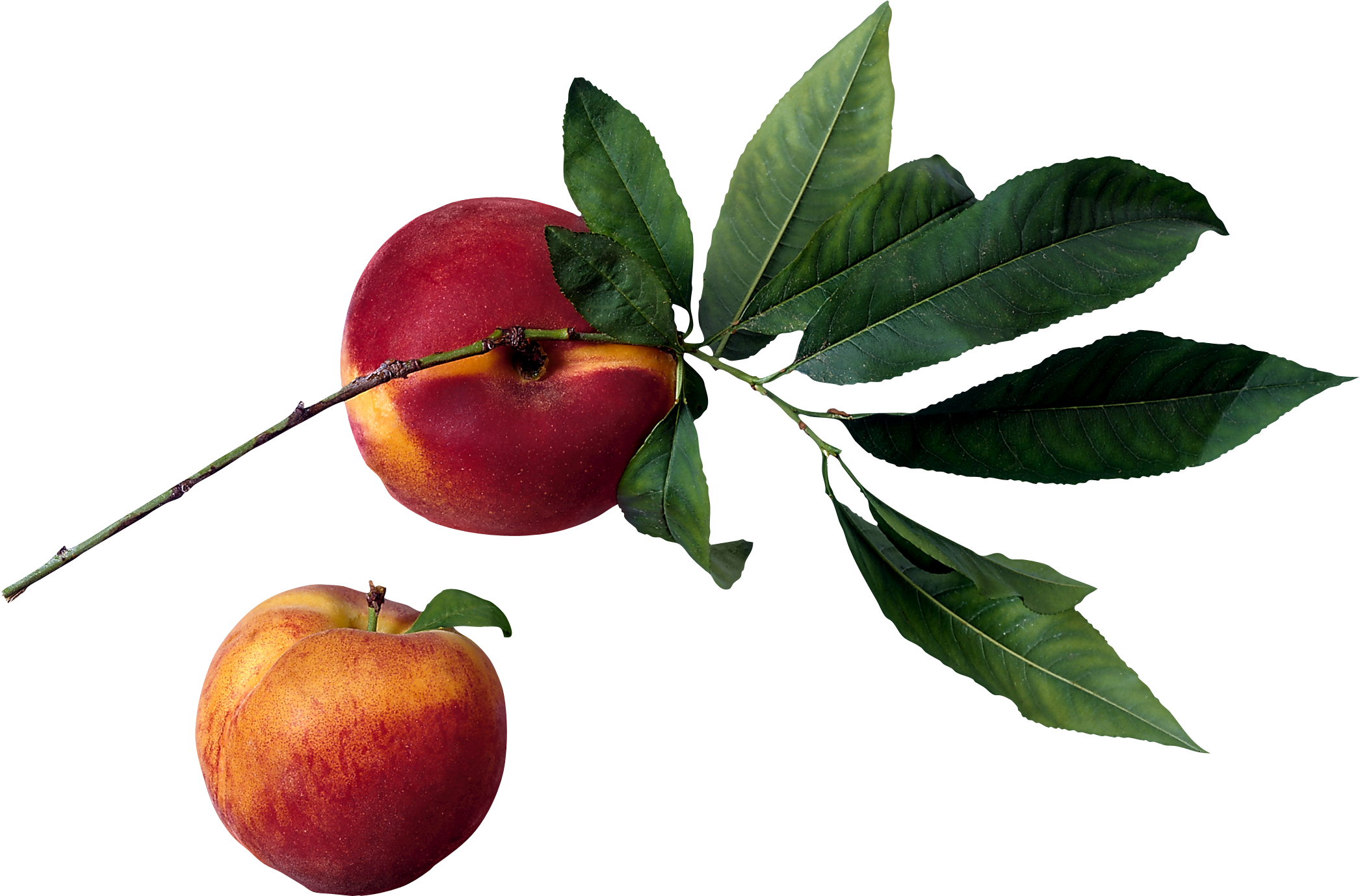 Best free Peach PNG Image Without Background