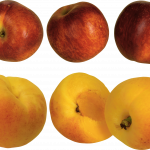 Free download of Peach PNG in High Resolution