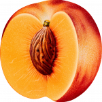 Grab and download Peach In PNG