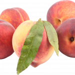 Best free Peach PNG Icon