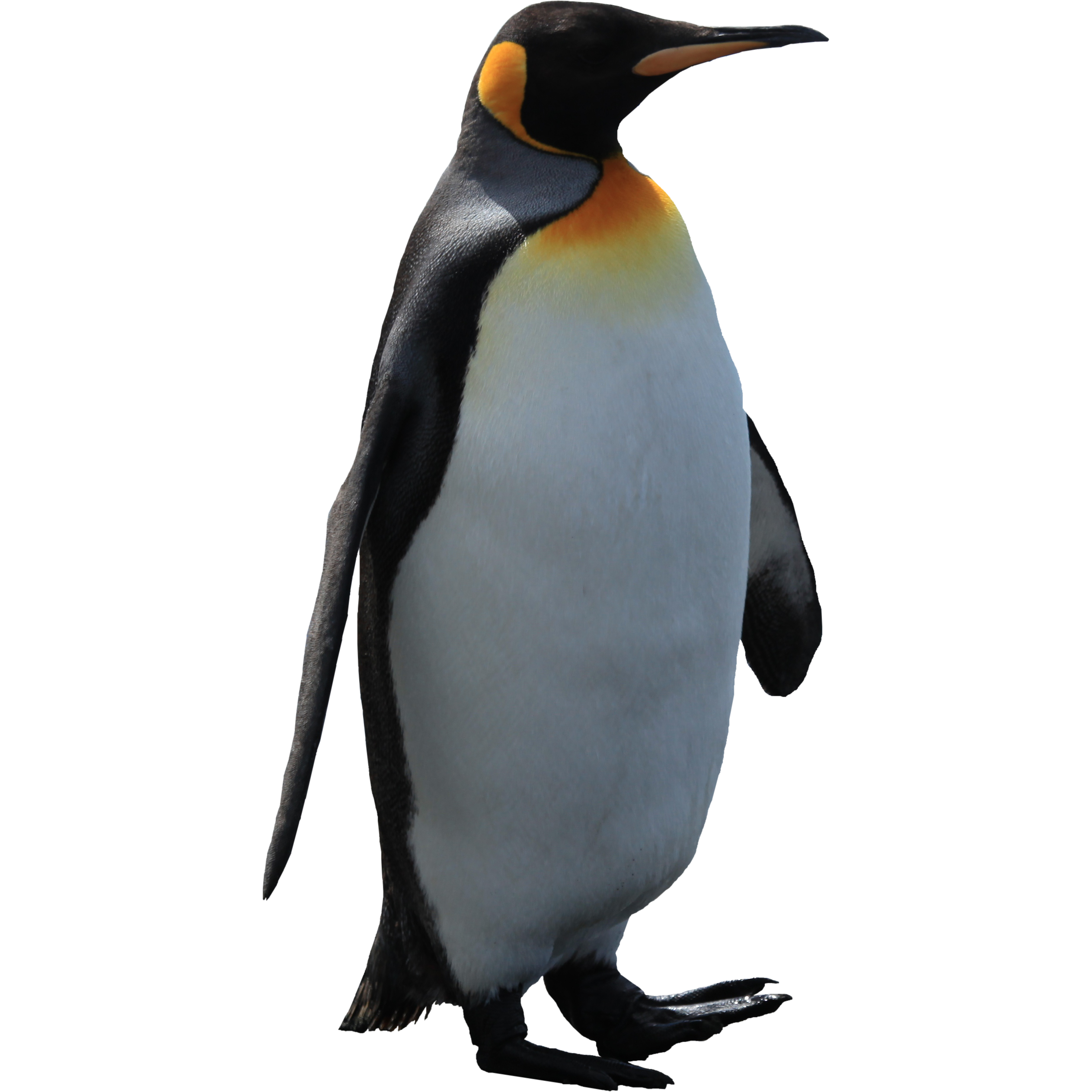 Free download of Penguins Icon Clipart