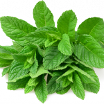 Download this high resolution Pepermint PNG Image