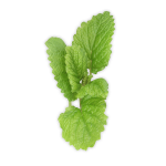Download and use Pepermint PNG Picture