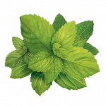 Now you can download Pepermint Transparent PNG Image