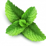 Download and use Pepermint  PNG Clipart