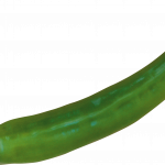 Best free Pepper High Quality PNG
