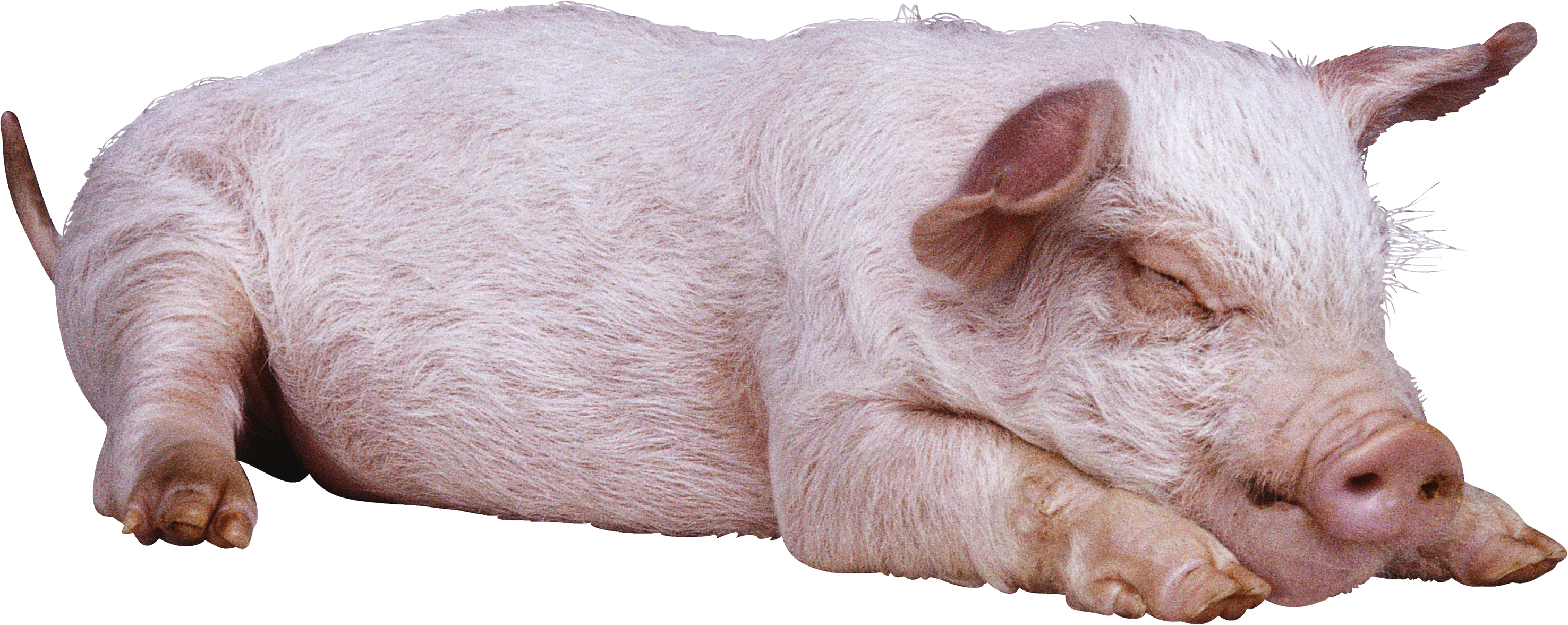 Pig Icon 51094 - Web Icons PNG