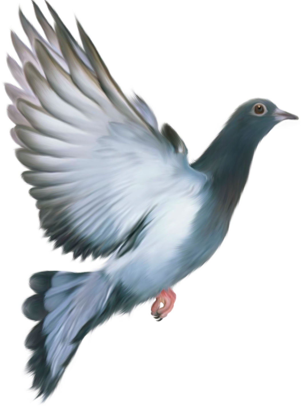 Grab and download Pigeon Icon PNG