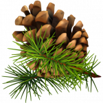 Now you can download Pine Cone In PNG