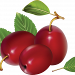 Now you can download Plum High Quality PNG