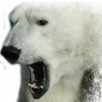 Download this high resolution Polar Bear PNG Image