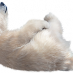 Download for free Polar Bear High Quality PNG