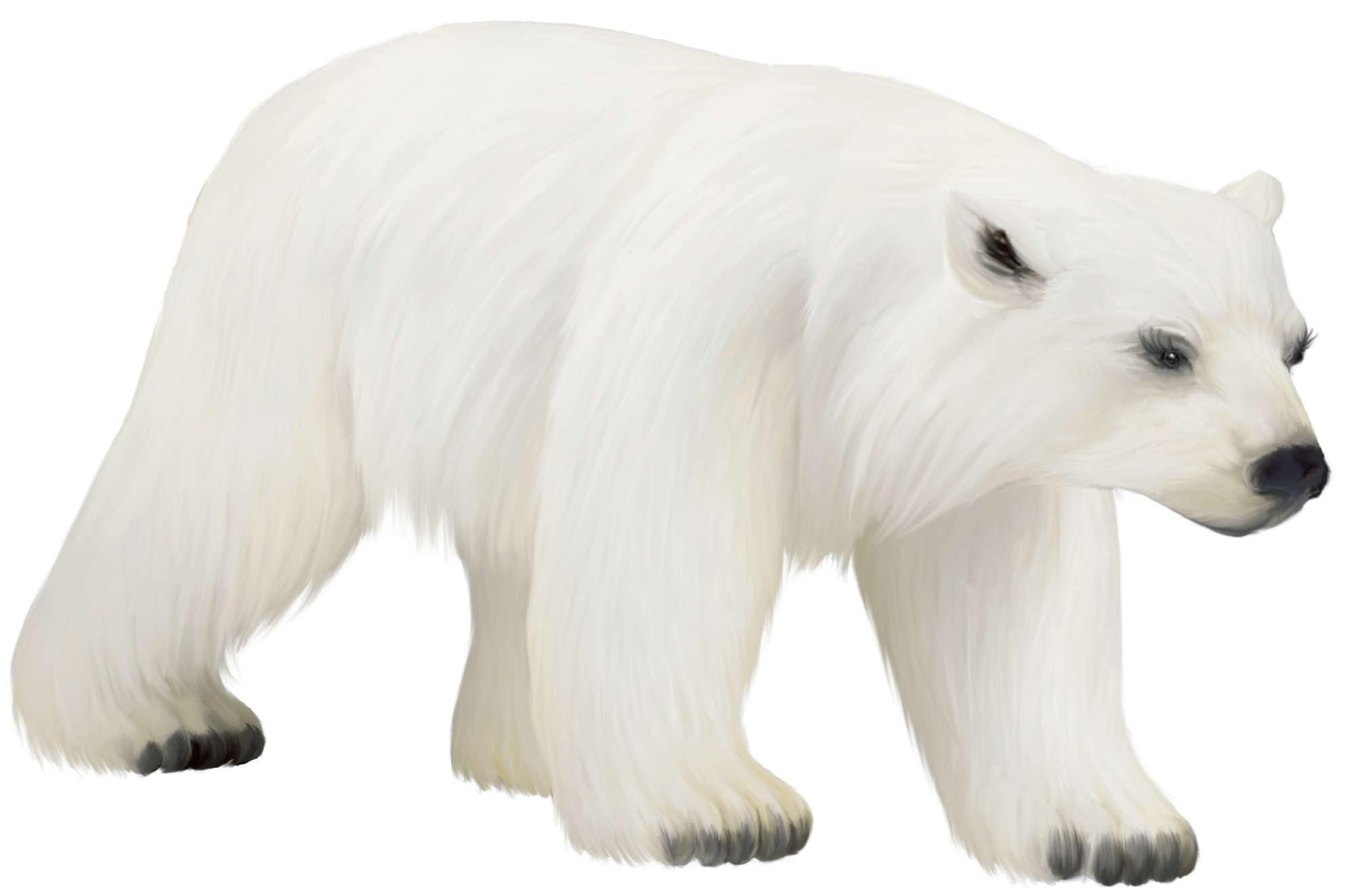 Free download of Polar Bear Icon PNG