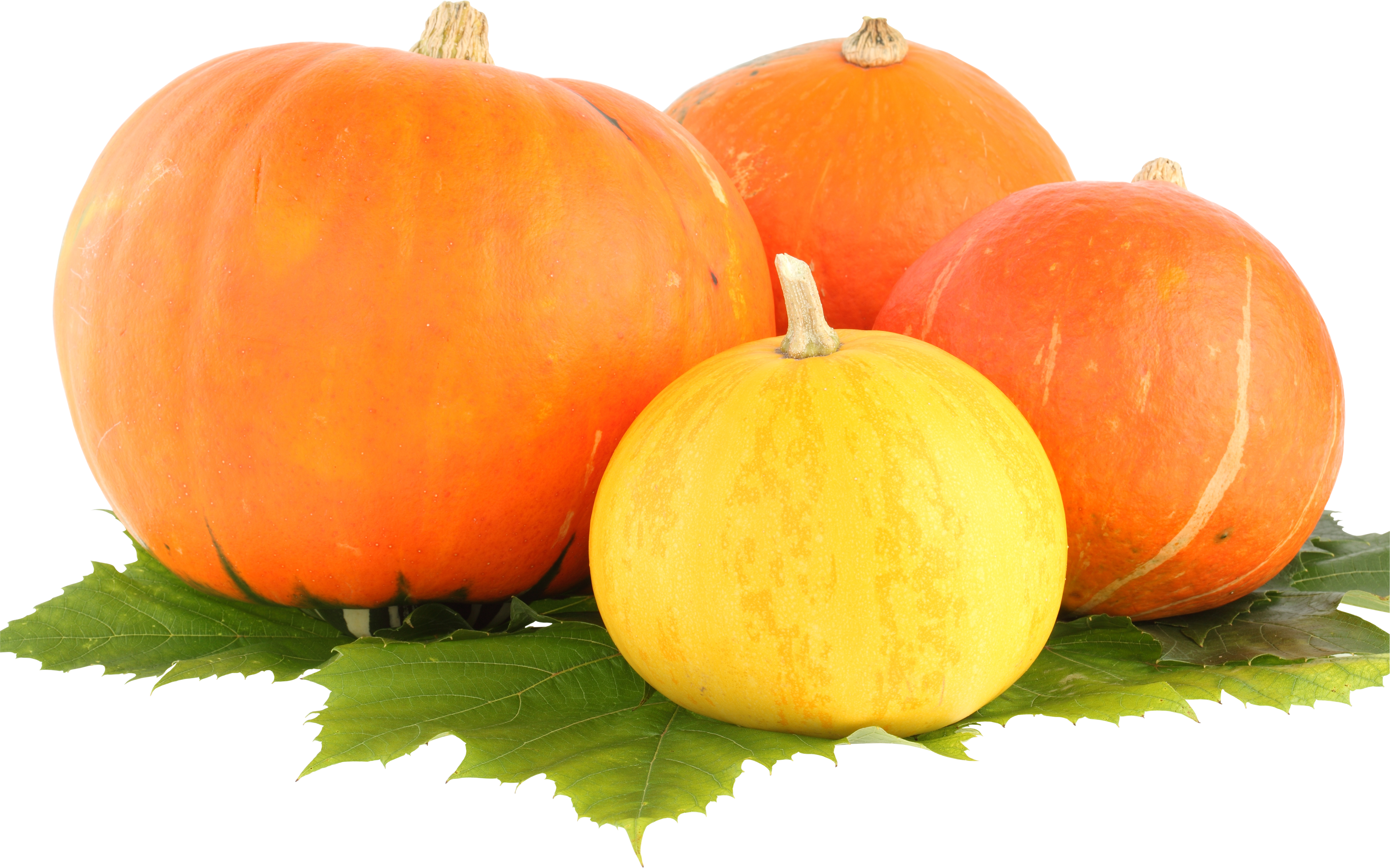 Free download of Pumpkin PNG