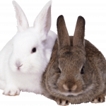 Download and use Rabbit PNG Icon