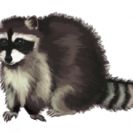 Download this high resolution Raccoon PNG in High Resolution