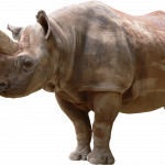 Download for free Rhino Transparent PNG File
