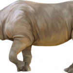 Download this high resolution Rhino PNG in High Resolution