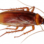 Download this high resolution Roach PNG Picture