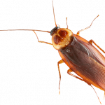 Grab and download Roach High Quality PNG