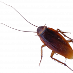 Download this high resolution Roach Icon Clipart