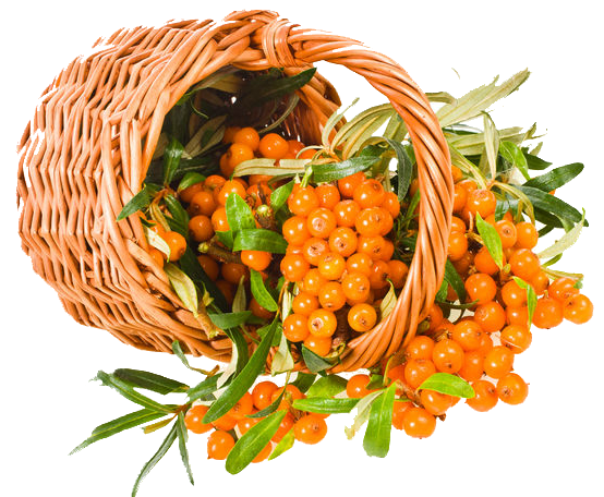 Download and use Sea Buckthorn PNG Icon